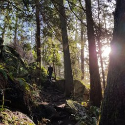 Dog Friendly Hikes around Vancouver