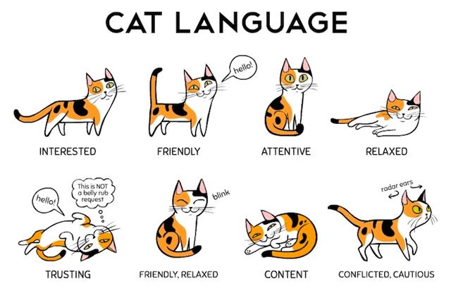 cat-language-e1500800811603