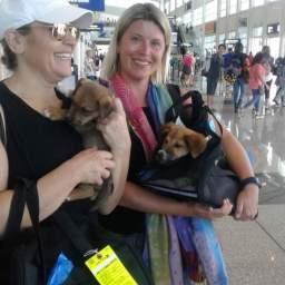 Travel Buddies – Saving Lives