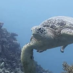 Liveaboard on the Great Barrier Reef